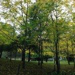 Walnut grove at Brentwood B&B.
