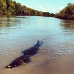 """""""Agro"""" 6.1m, 60yrs old, biggest croc in the river!"""