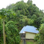 Guest rooms surrounded by rainforest