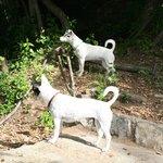 Hondjes op het terrein