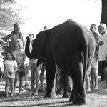 Elephant on the beach!