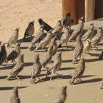 Gang d'oiseaux
