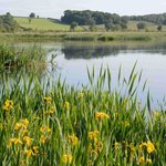 RSPB Leighton Moss Nature Reserve