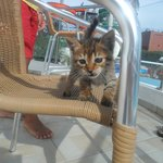 Wee Kitten in the waterpark