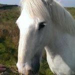Horsey!! :)