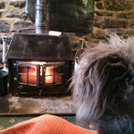 Guinness cuddles by the fire :) <3