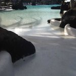 Beautiful Lagoon Pool