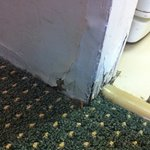 rusty skirting board 2