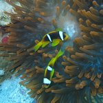 From the house reef in Naama Bay
