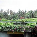 Garden on roof top
