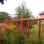vegetazione locale