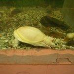 Turtles on aquarium