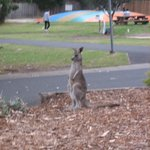 Bouncy pillow in background. Roos are close