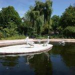 dierentuin Antwerpen