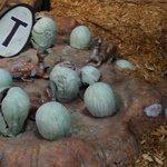 Little Hatching eggs