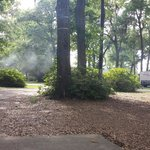 Shady camping sites