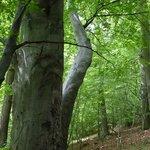 Wunderschöne Buchenwälder