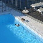piscine avec les canards