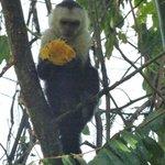 petit déjeuner  pour petit singe