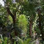 Felt like walking in botanical garden
