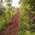 Trail can be steep and very muddy when raining.