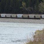 นั่งริมฝั่งแม่น้ำโบว์มองเห็นรถไฟขนสินค้า