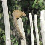 Ecureuil dans le jardin