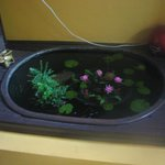 Small fish tank near entrance with tiny fishes inside.