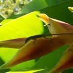Little lizard on plant