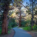Big Bear's Alpine Pedal Path for biking and forest walks.