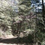 Trails galore.