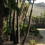 Path to Playa las Palmas, a nearby but remote swimming beach