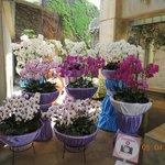 Orquídeas e mais orquídeas