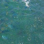 Fish feeding - glass bottom boat