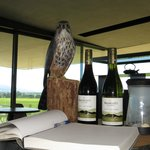 Falcons breeding programme sponsored by winery.