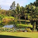 Large Fresh water pond