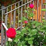 Las flores del jardín...