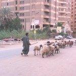 Cairo 8.5.2014