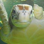 Manly Sea Life Sanctuary