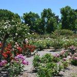 Adelaide International Rose Garden in Spring