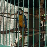 Macaws at the Mission Inn