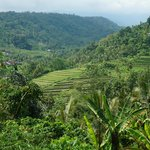 rijstvelden omgeving munduk