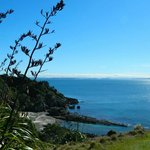 The views here seriously can't be beat. Tiritiri Matangi May 2014.