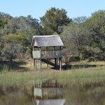 scenic dam where croc lives