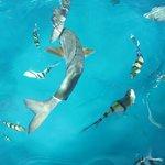 RANDOM FISH