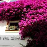 Flowering bougainvillaea by the reception