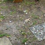 Cigarette butts vor der Cabin