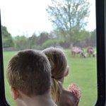 Viewing Safari from comfort of bus
