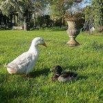 Hope Ducks