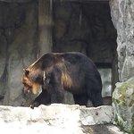 Loa osos